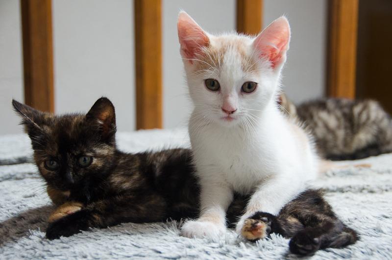 Pistache (ancien Lonny) chaton Blanc et Roux clair né début mai 2015 Lonny%20S2-1_zpsnyjmhlmc