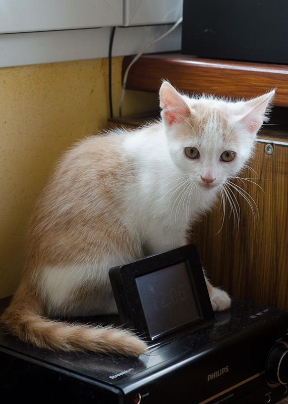 Pistache (ancien Lonny) chaton Blanc et Roux clair né début mai 2015 Lonny%20S2-5_zpsrpxtnt4y