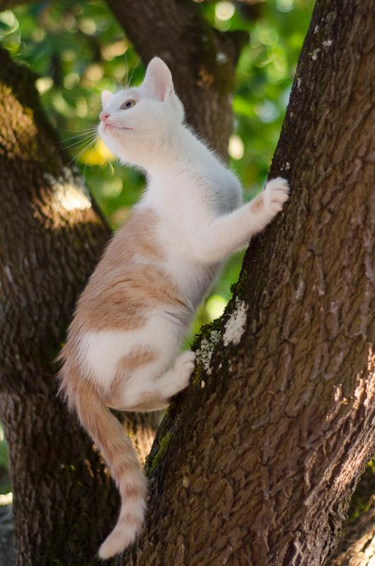 Pistache (ancien Lonny) chaton Blanc et Roux clair né début mai 2015 Lonny%20S4-14_zpsisgdrqeq