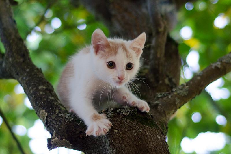 Pistache (ancien Lonny) chaton Blanc et Roux clair né début mai 2015 Lonny%20S4-15_zpskigpwbcx