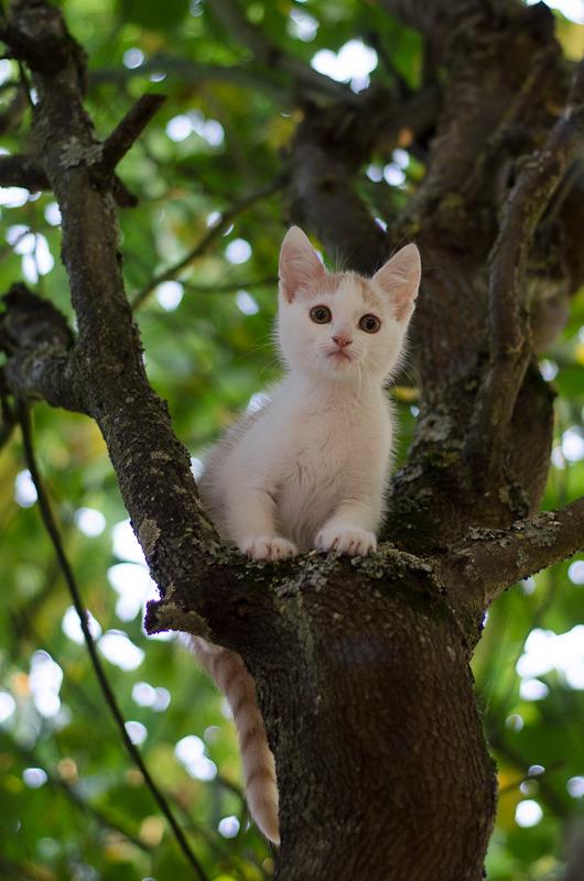 Pistache (ancien Lonny) chaton Blanc et Roux clair né début mai 2015 Lonny%20S4-17_zps55lifucp