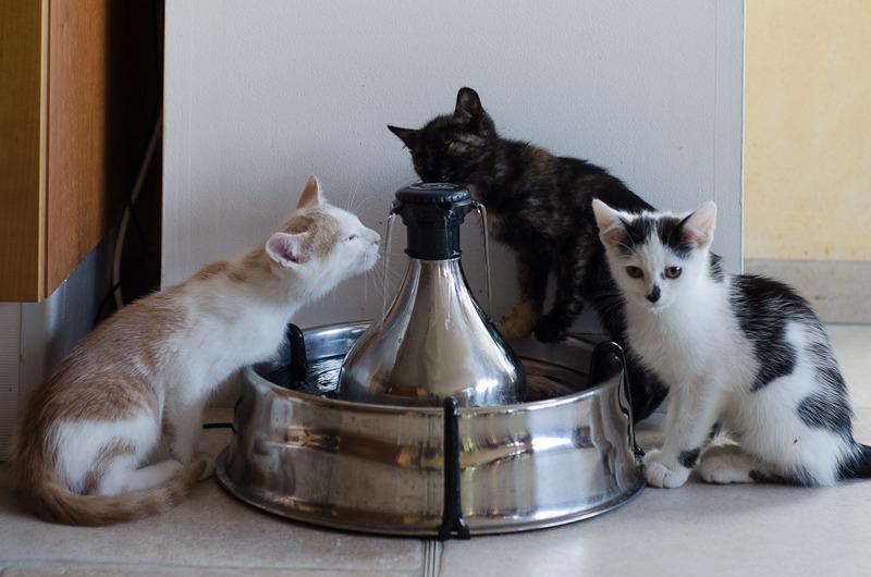Pistache (ancien Lonny) chaton Blanc et Roux clair né début mai 2015 Lonny%20S4-2_zpsodhelkmw