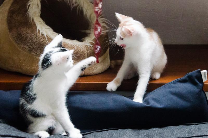 Pistache (ancien Lonny) chaton Blanc et Roux clair né début mai 2015 Lonny%20S5-15_zpsqksmx66m