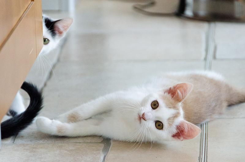Pistache (ancien Lonny) chaton Blanc et Roux clair né début mai 2015 Lonny%20S5-2_zps5uvhrtx8