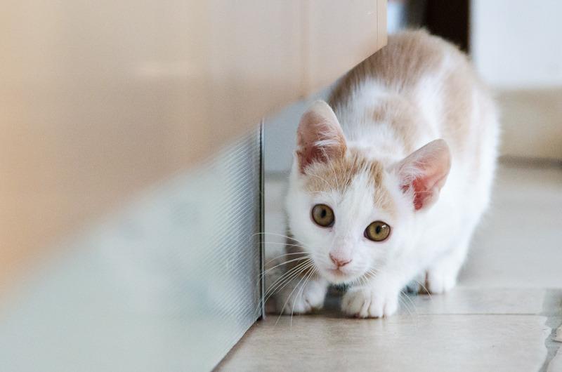 Pistache (ancien Lonny) chaton Blanc et Roux clair né début mai 2015 Lonny%20S5-4_zpsrvb3vhbe