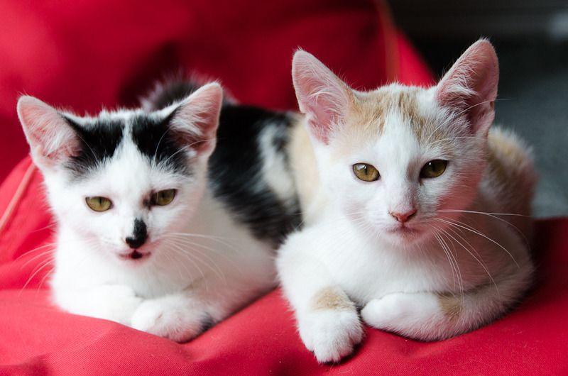 Pistache (ancien Lonny) chaton Blanc et Roux clair né début mai 2015 - Page 2 Lonny%20S6-13_zps7zrrszwy