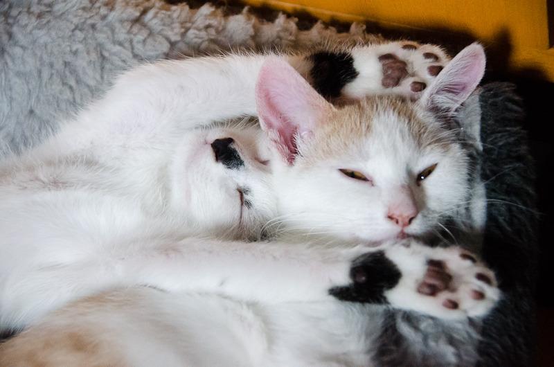 Pistache (ancien Lonny) chaton Blanc et Roux clair né début mai 2015 - Page 2 Lonny%20S6-7_zpspopjdnaf