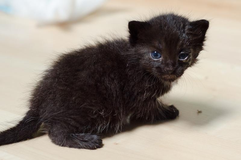 Loupiot, mâle type européen noir né 15/02/2015 Loupiot%20-%20J02-1_zpsyimmveb1