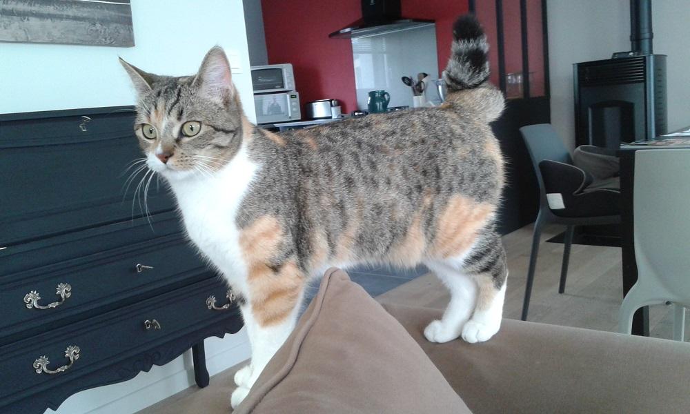 Princesse Leïa, femelle type européenne tigrée calicot née 20/02/2015 - Page 4 20151203_143345%201_zpsrmql0ylh
