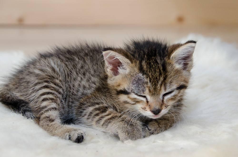 Melba, européenne tigrée née le 1er Août 2016 CD5%20-%20J3-3_zpsz7ynk4cd