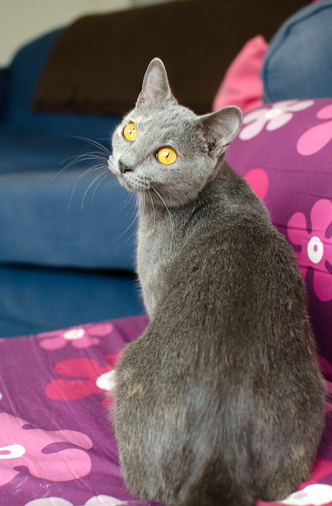Isabelle, femelle type européen grise estimée née 12/02/2015 - Page 2 Isabelle%20S1-28_zps7vcl14hp