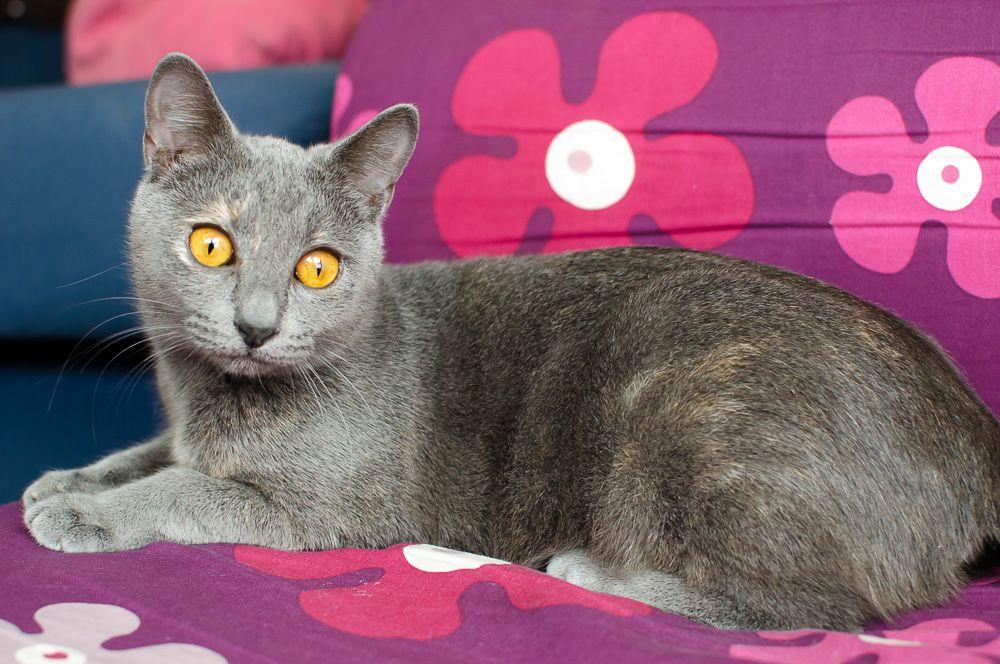 Isabelle, femelle type européen grise estimée née 12/02/2015 - Page 2 Isabelle%20S1-30_zpsfkatgj4v