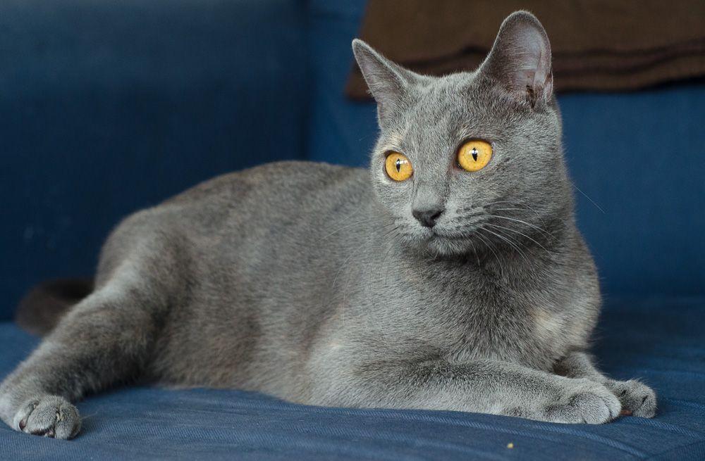 Isabelle, femelle type européen grise estimée née 12/02/2015 - Page 2 Isabelle%20S1-40_zpshrqkakiz