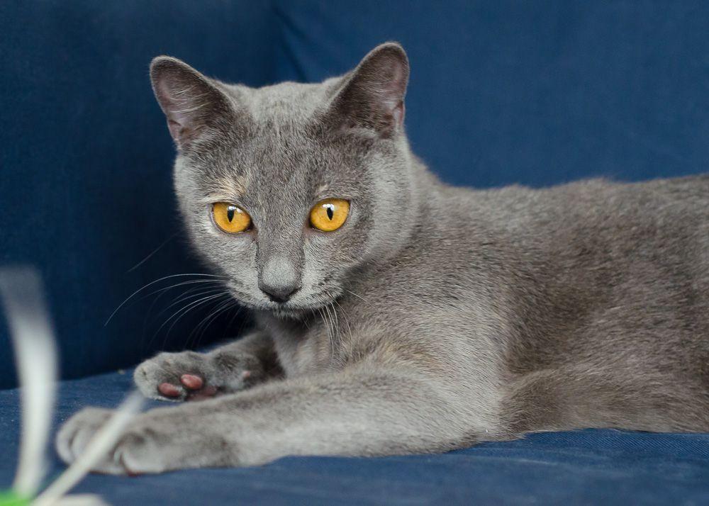 Isabelle, femelle type européen grise estimée née 12/02/2015 - Page 2 Isabelle%20S1-42_zpsi5n3zlox