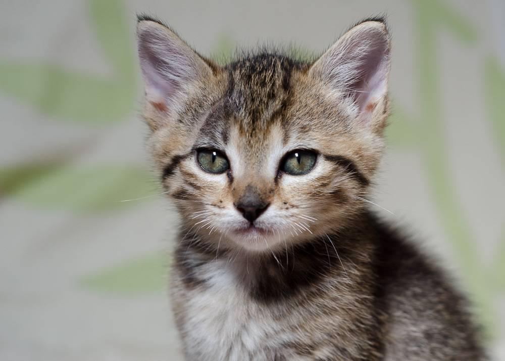 Melba, européenne tigrée née le 1er Août 2016 J13%20-%20Melba-4_zps9jmtpbeq