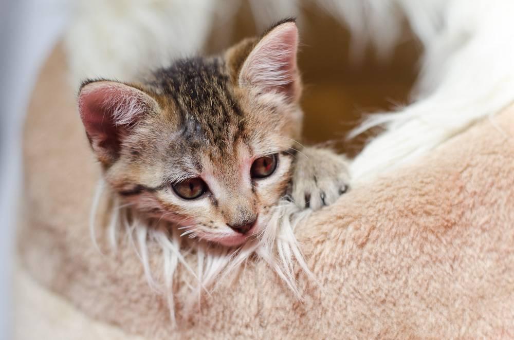 Melba, européenne tigrée née le 1er Août 2016 J15%20-%20Melba-1_zps6wc4hw2h