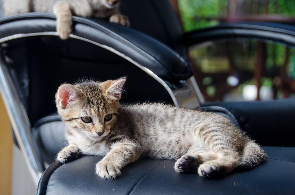 Melba, européenne tigrée née le 1er Août 2016 J23%20-%20Melba-1_zpsjvj7kmox