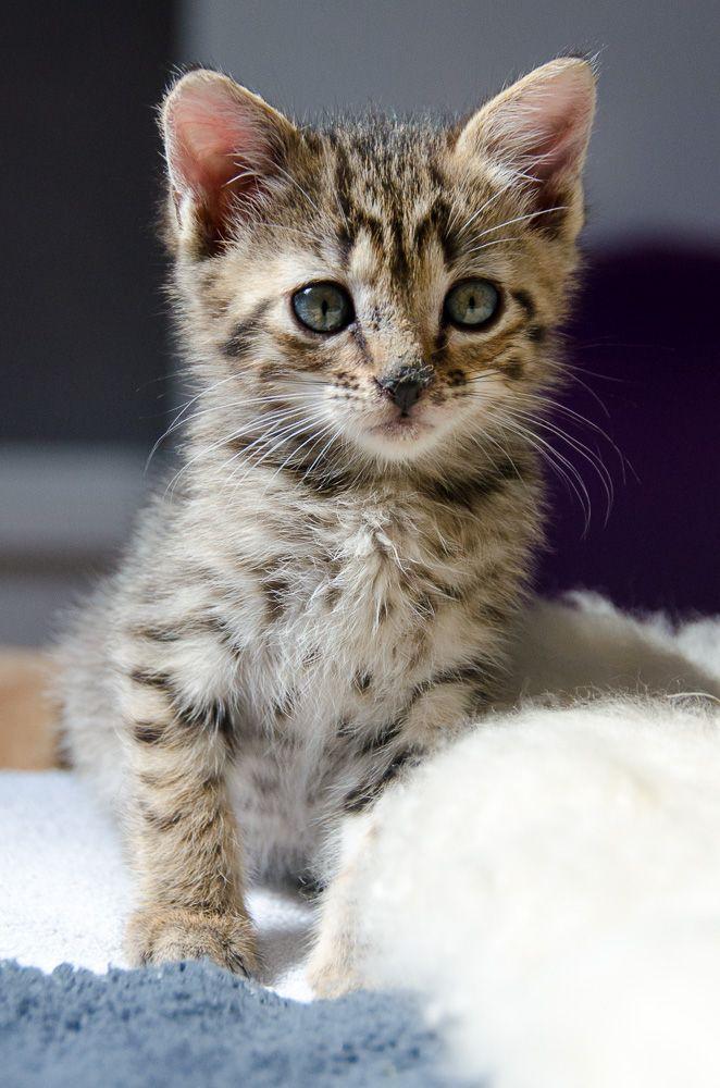 Miette, européenne tigrée née le 1er Août 2016 J3%20-%20Miette-2_zpsnikvzqgo