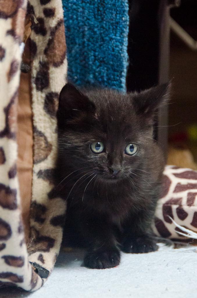 Thïa, (ex Minnie) femelle européenne noire estimée née 20/03/2016 MinnieS2-21_zpspv4rccft