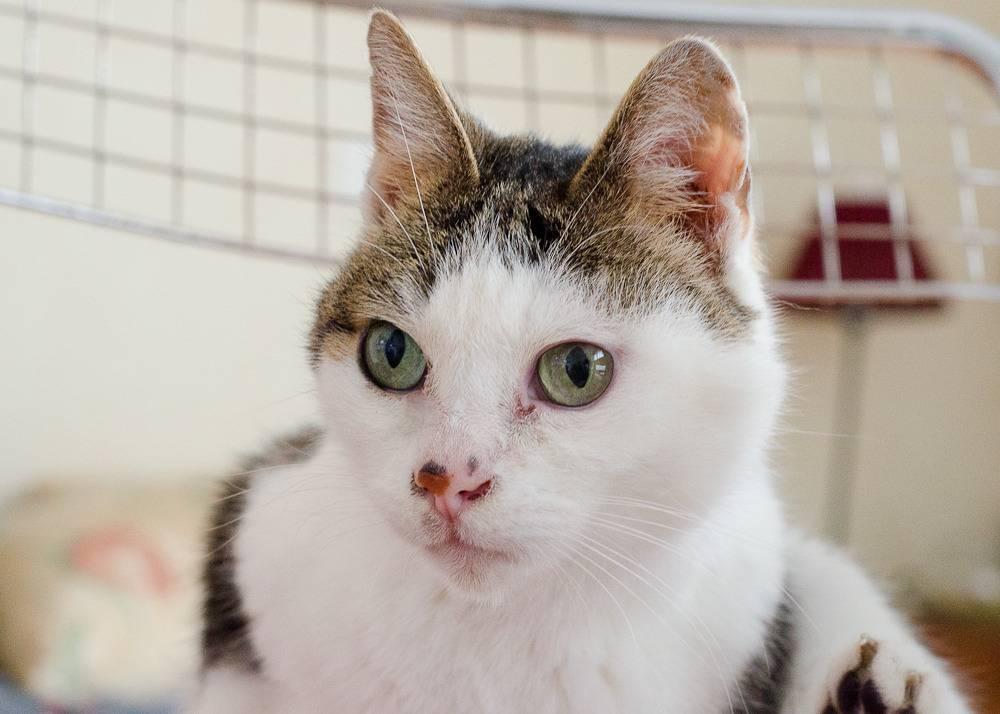 Poussy, femelle marron et blanche née le 1 juin 2002 Poussy%20S1-16_zpsjh7t4fhe