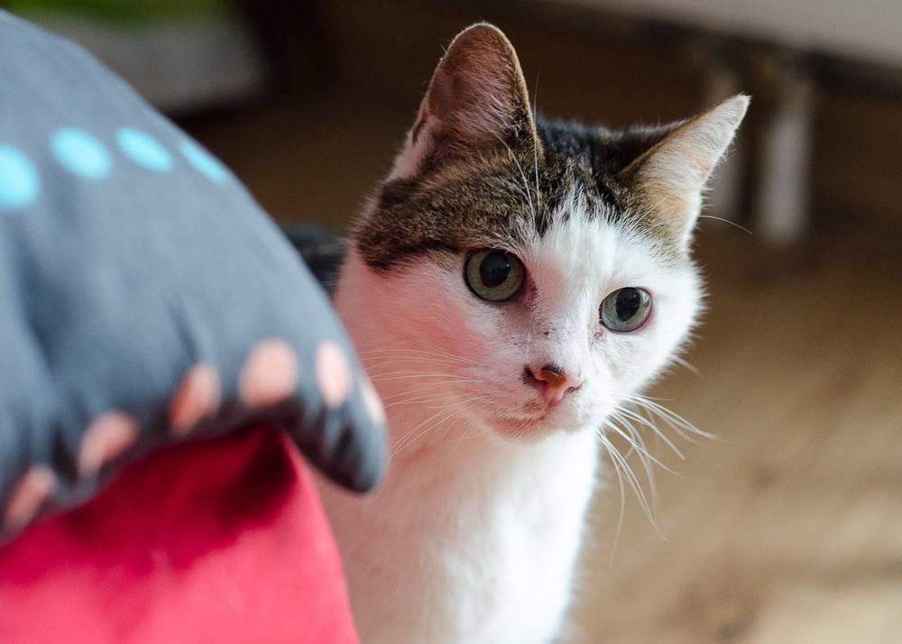 Poussy, femelle marron et blanche née le 1 juin 2002 Poussy%20S1-1_zpsbj8l03np
