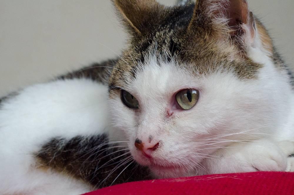 Poussy, femelle marron et blanche née le 1 juin 2002 Poussy%20S1-20_zps4h0lhwpf