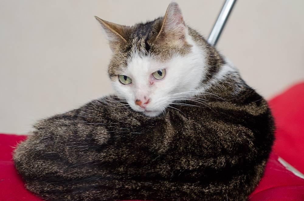 Poussy, femelle marron et blanche née le 1 juin 2002 Poussy%20S1-22_zpss4s7eden