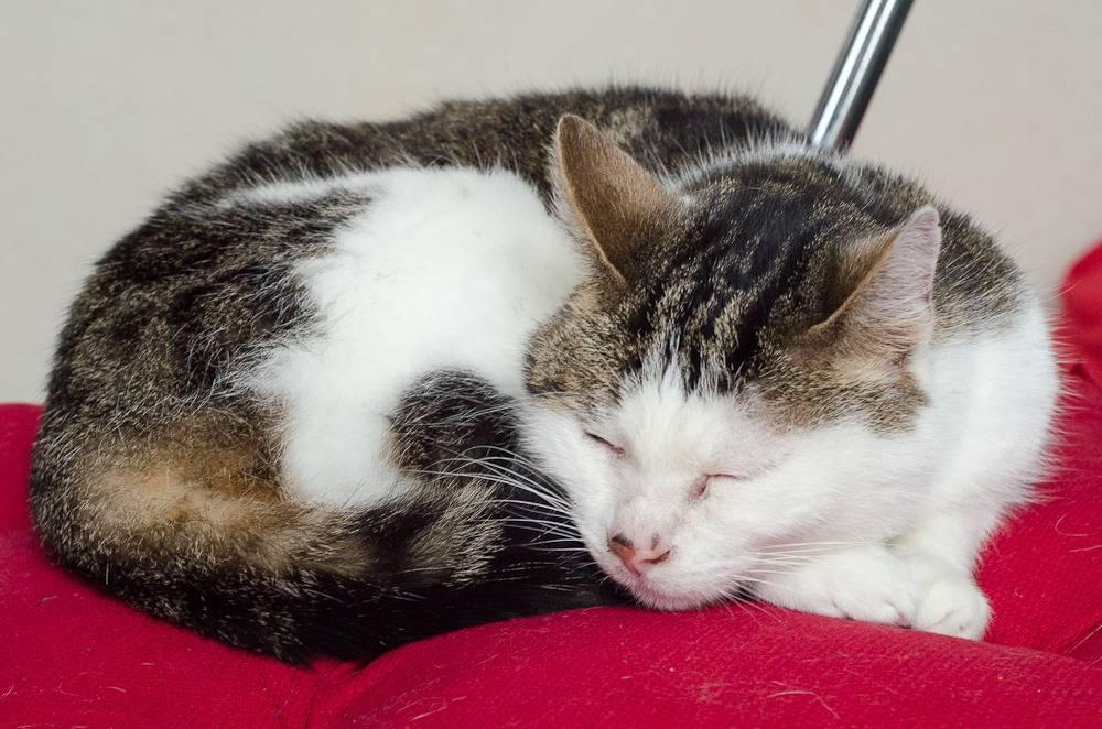 Poussy, femelle marron et blanche née le 1 juin 2002 Poussy%20S1-26_zps2y7ot4zw