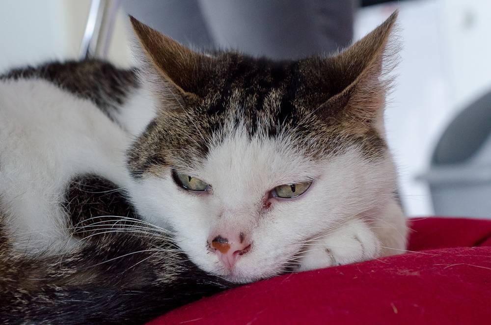 Poussy, femelle marron et blanche née le 1 juin 2002 Poussy%20S1-27_zpszy46yhrm