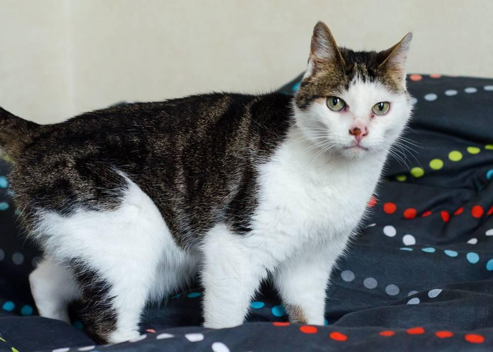 Poussy, femelle marron et blanche née le 1 juin 2002 Poussy%20S1-3_zps8cxzz6mq