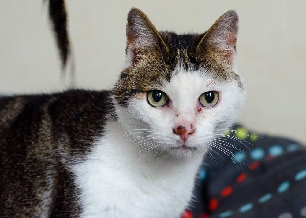 Poussy, femelle marron et blanche née le 1 juin 2002 Poussy%20S1-4_zpskmmqqyg2