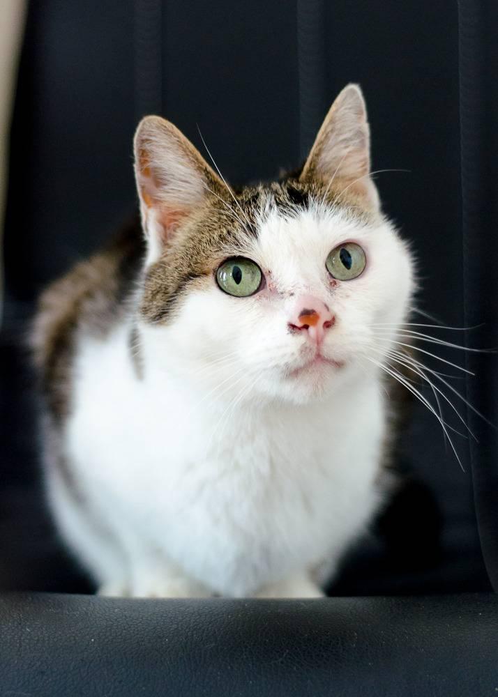 Poussy, femelle marron et blanche née le 1 juin 2002 Poussy%20S1-8_zps4qkrchod