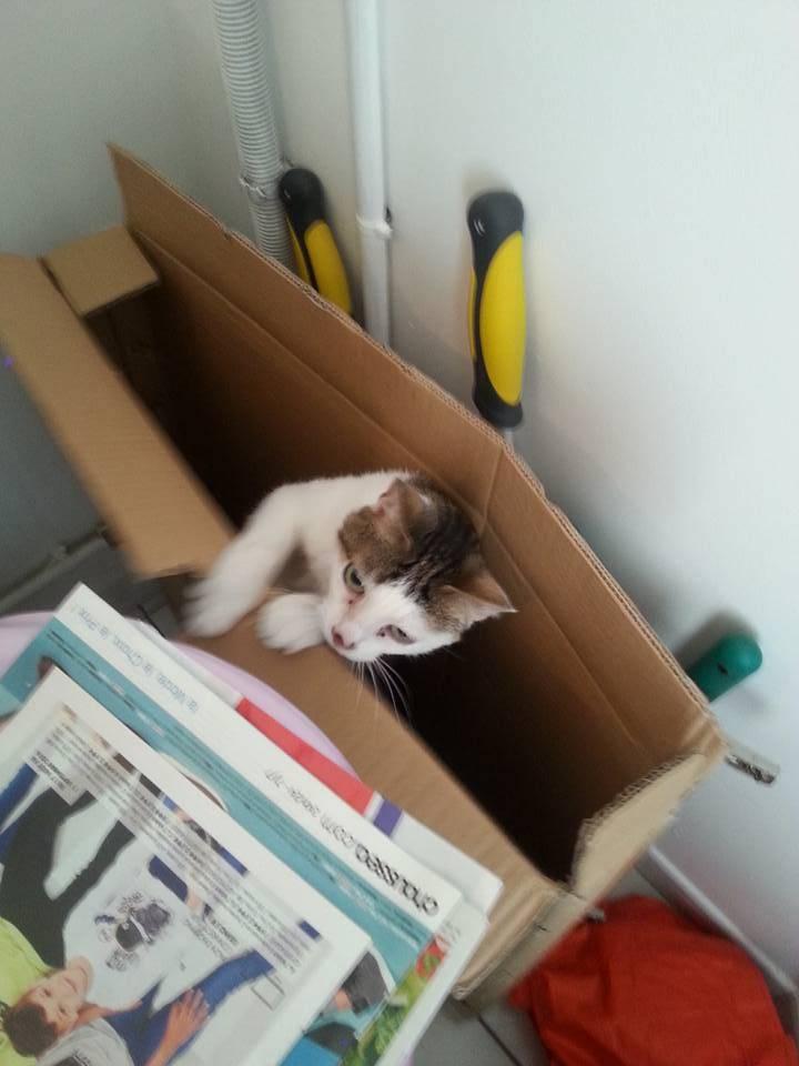 Poussy, femelle marron et blanche née le 1 juin 2002 - Page 3 Poussy%201_zpsg2tpzkrc