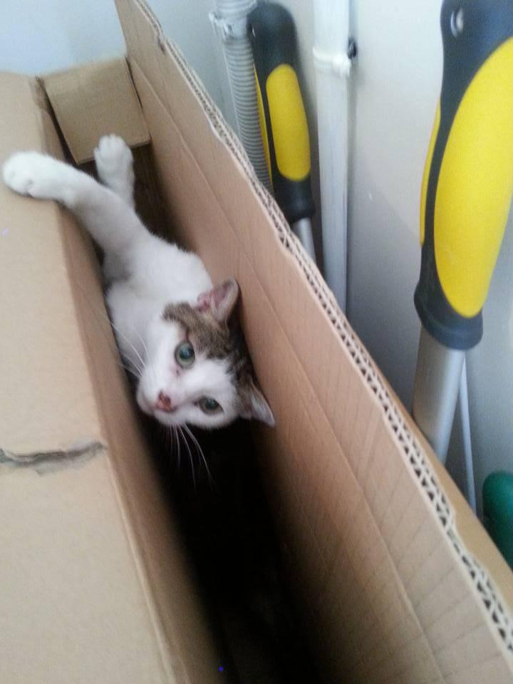 Poussy, femelle marron et blanche née le 1 juin 2002 - Page 3 Poussy%202_zpsugrscb08