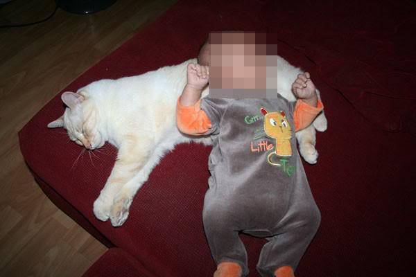 Embarazo y gatos: ¿incompatibles? La verdad sobre un mito. No te dejes manipular por nadie. EmbarazoYGatos_003