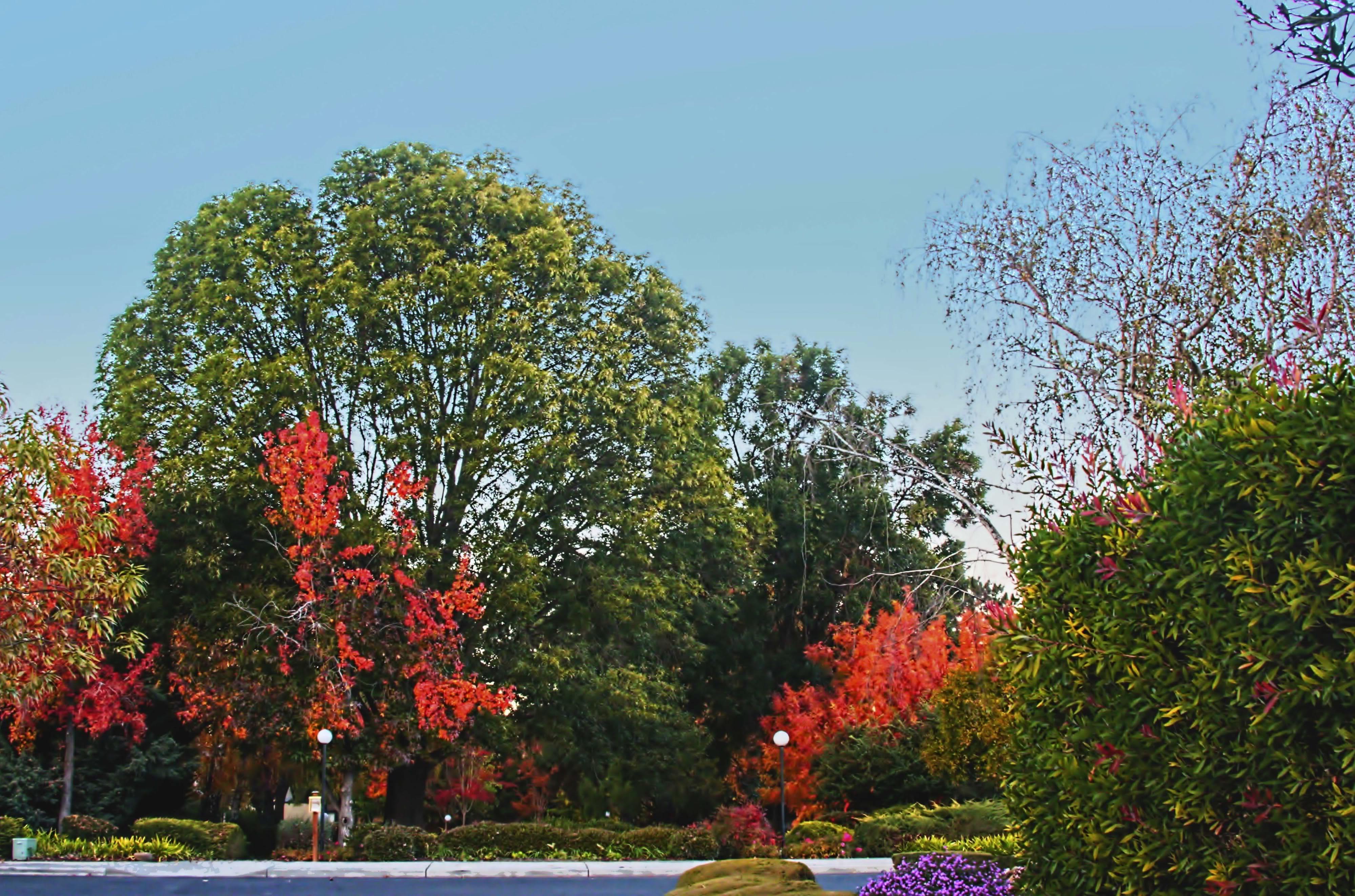 இயற்கை அழகு நிறைந்த காட்சிகள்  - Page 6 Colorfultrees