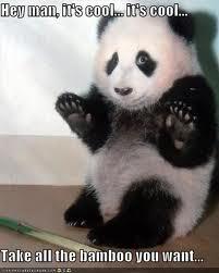 Funny pic thread - Page 2 Panda-1