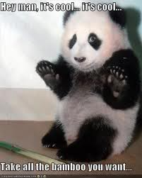 Funny pic thread - Page 2 Panda