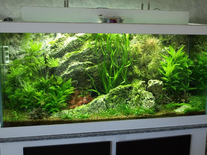 Plantes qui ne poussent plus... P7038734