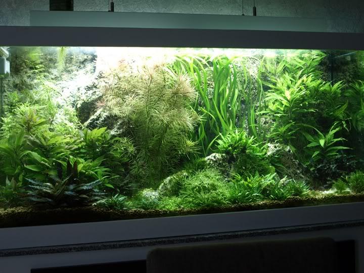Plantes qui ne poussent plus... PB259186