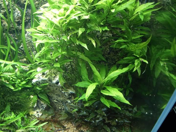 Plantes qui ne poussent plus... PB259195