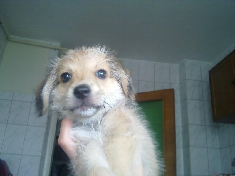 Nino, né en juin 2011, petit bout adorable, abandonné dans la rue  46ecfc73