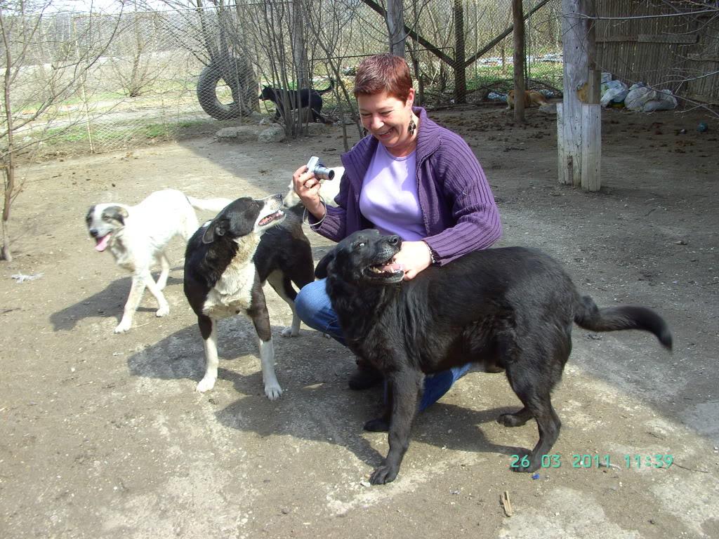 Baloo, mâle, né en 2008, type labrador  BILD0829
