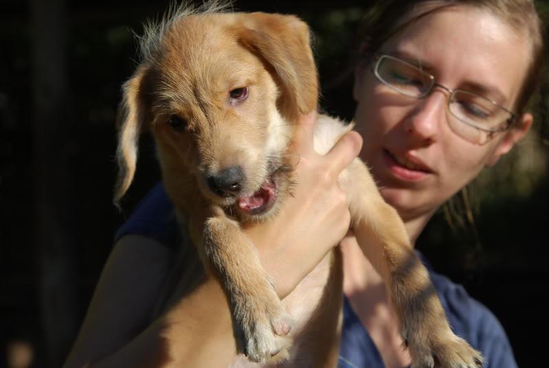 Nino, né en juin 2011, petit bout adorable, abandonné dans la rue  4f3b7ddb