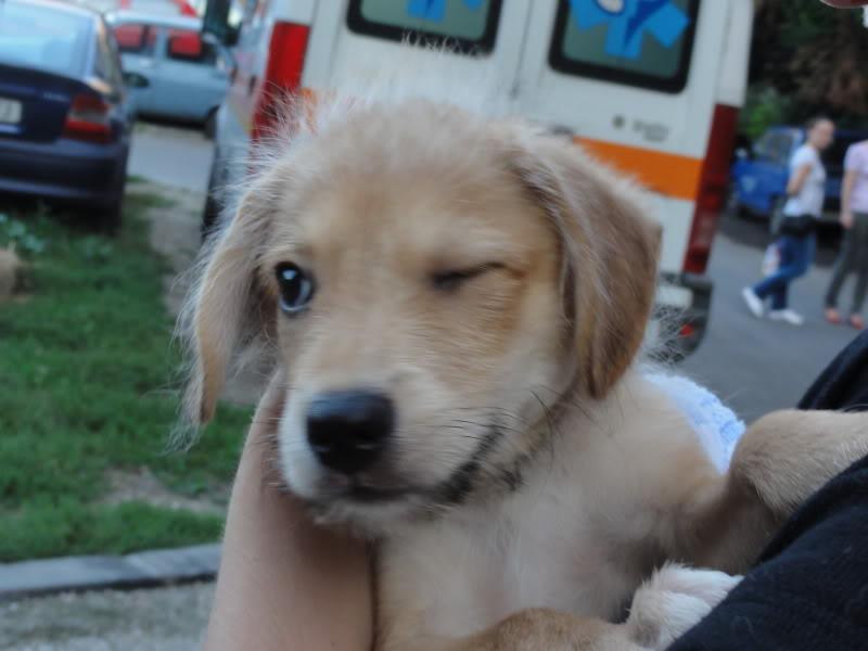 Nino, né en juin 2011, petit bout adorable, abandonné dans la rue  935fdf2d