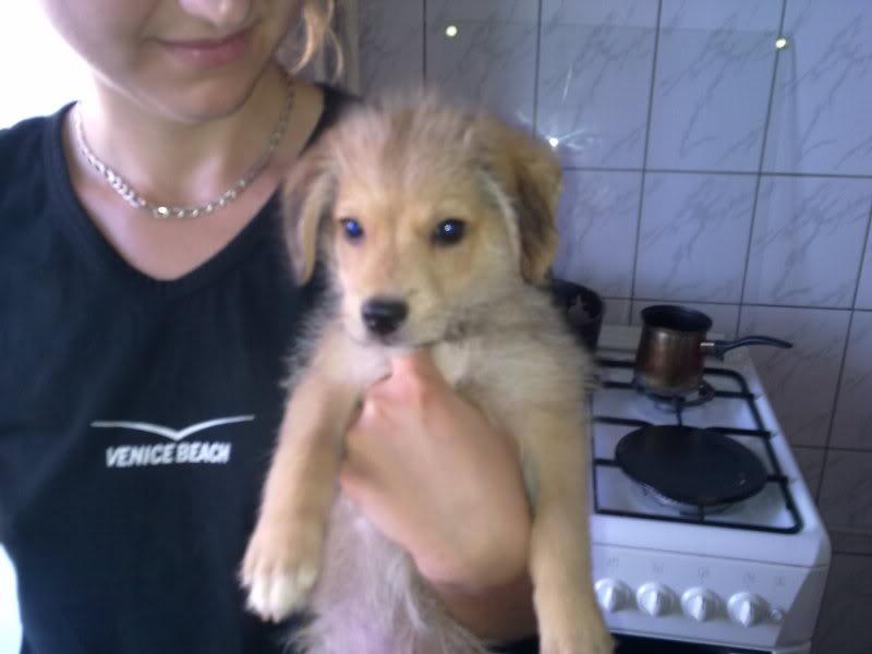 Nino, né en juin 2011, petit bout adorable, abandonné dans la rue  95918fa4