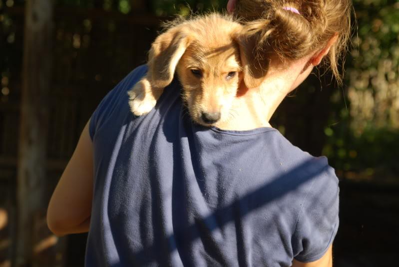 Nino, né en juin 2011, petit bout adorable, abandonné dans la rue  C56b2d5e
