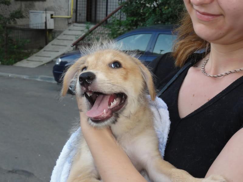 Nino, né en juin 2011, petit bout adorable, abandonné dans la rue  Dfcac00a