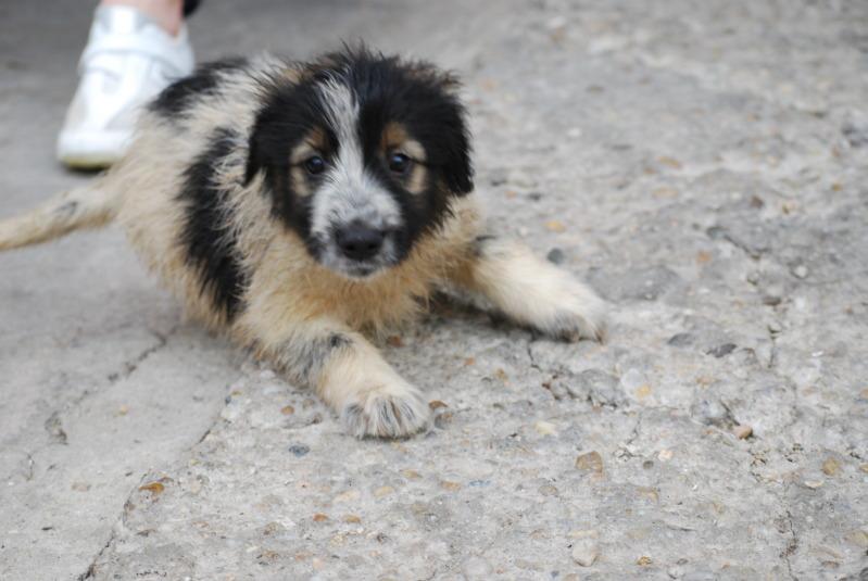 Spot, né en avril 2012, abandonné à l'âge de 3 semaines 36db7a65