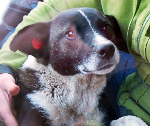 Booba, notre petit vieux du refuge DSCN1037_zps2d0d989f
